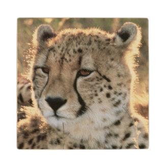 Primer de guepardos posavasos de madera