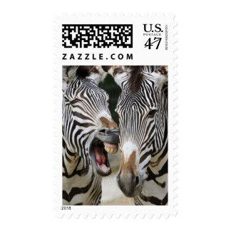 primer de la cabeza de cebras, SP del Equus., Sellos Postales