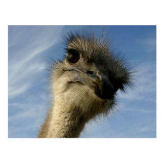 Primer de la cara de la avestruz postal