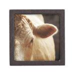 Primer de la cara de la vaca cajas de joyas de calidad