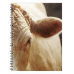 Primer de la cara de la vaca cuadernos