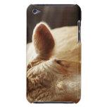 Primer de la cara de la vaca iPod Case-Mate protectores