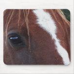 Primer de la cara del caballo tapetes de ratones