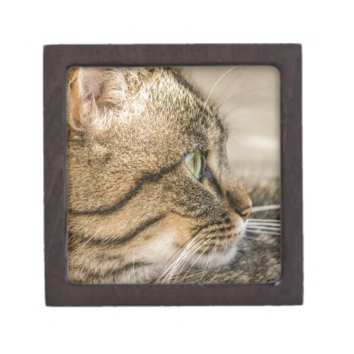 Primer de la cara del gato de Tabby Cajas De Regalo De Calidad