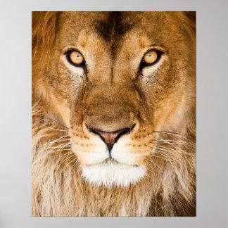 Primer de la cara del león impresiones