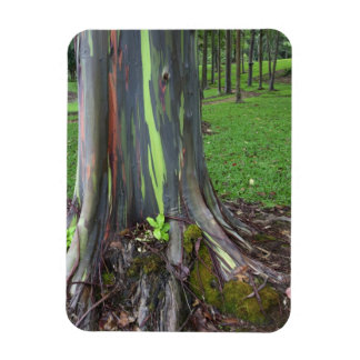 Primer de la corteza de árbol colorida de eucalipt iman de vinilo