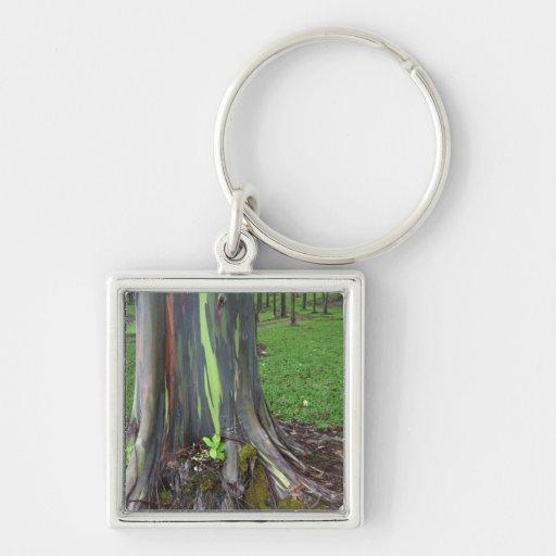 Primer de la corteza de árbol colorida de eucalipt llavero cuadrado plateado