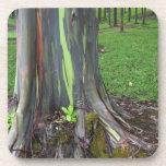 Primer de la corteza de árbol colorida de eucalipt posavasos de bebida