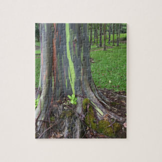 Primer de la corteza de árbol colorida de eucalipt rompecabezas con fotos
