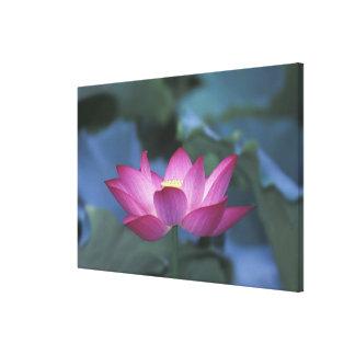 Primer de la flor de loto roja y de hojas verdes impresiones en lienzo estiradas