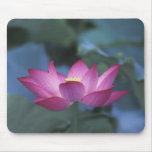 Primer de la flor de loto roja y de hojas verdes, alfombrilla de raton