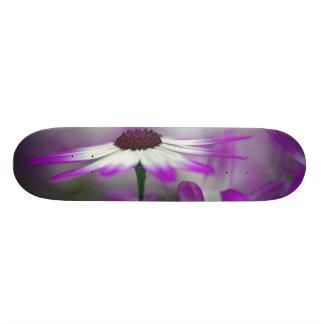 """Primer de la flor púrpura, jardín de Keukenhof, Patineta 7 3/8"""""""