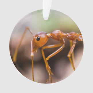 Primer de la hormiga del trabajador