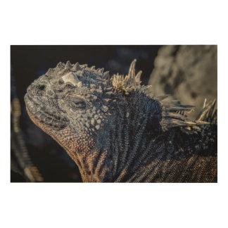 Primer de la iguana marina de la cabeza y de cuadros de madera