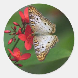 Primer de la mariposa blanca pegatina redonda