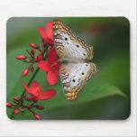 Primer de la mariposa blanca tapete de ratones