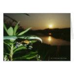 Primer de la mariposa en la hoja en la puesta del  tarjeton