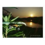 Primer de la mariposa en la hoja en la puesta del  tarjeta postal