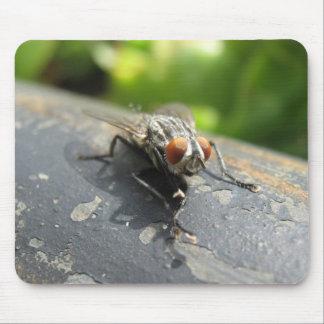 Primer de la mosca tapetes de raton