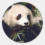 Primer de la panda etiqueta redonda