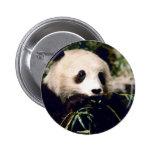 Primer de la panda pins
