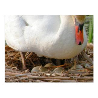 Primer de la postal de los huevos del cisne