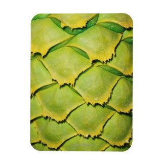 Primer de la textura y del modelo del árbol tropic imán rectangular