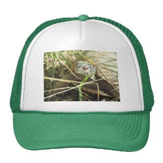 Primer de la tortuga de caja del desierto gorra