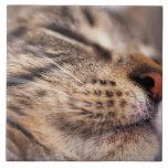 Primer de las barbas y del bozal del gato azulejos cerámicos