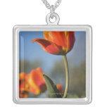 Primer de las flores del tulipán collares
