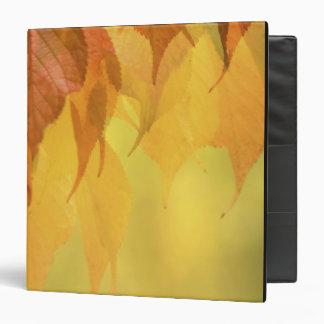 """Primer de las hojas de la caída en una rama carpeta 1 1/2"""""""