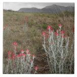 Primer de las plantas de desierto, Del Río, Tejas, Azulejo Cuadrado Grande