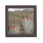 Primer de las plantas de desierto, Del Río, Tejas, Caja De Regalo De Calidad
