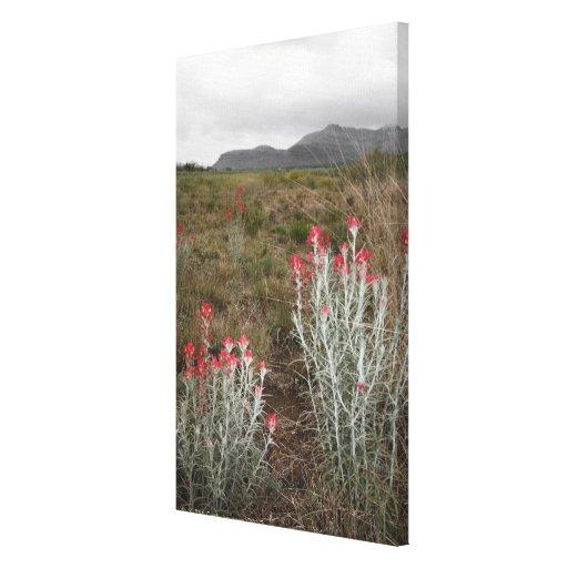Primer de las plantas de desierto, Del Río, Tejas, Lona Envuelta Para Galerias