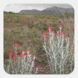 Primer de las plantas de desierto, Del Río, Tejas, Colcomania Cuadrada