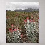 Primer de las plantas de desierto, Del Río, Tejas, Póster