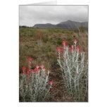 Primer de las plantas de desierto, Del Río, Tejas, Felicitaciones