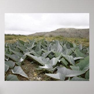 Primer de las plantas de desierto, Presidio, Tejas Posters