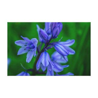 Primer de los Bluebells Impresión En Lienzo