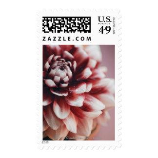 Primer de los descensos del agua en una flor sello postal