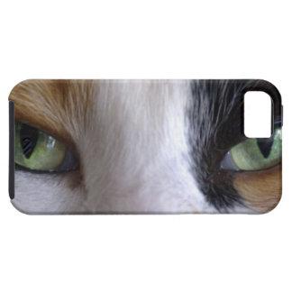 Primer de los ojos de gato iPhone 5 fundas