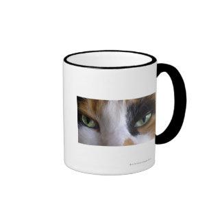 Primer de los ojos de gato taza de dos colores