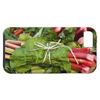 Primer de manojos de ruibarbo en cesta iPhone 5 protectores