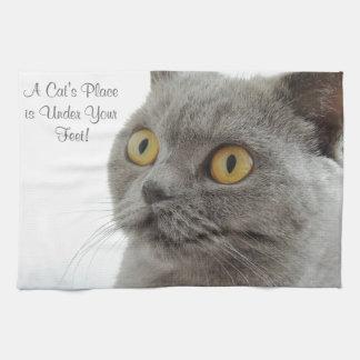 Primer de oro de los ojos del gato gris toalla