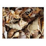 Primer de Seashells tropicales Tarjeta Postal
