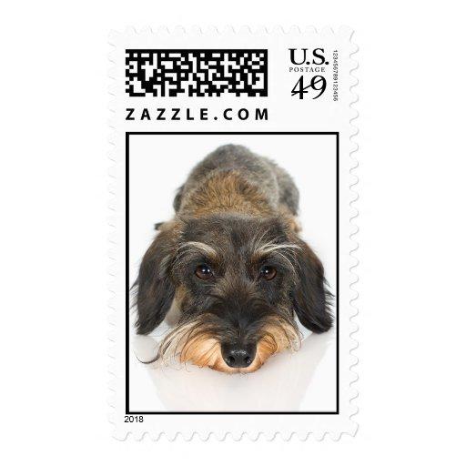 Primer de Terrier Sellos Postales
