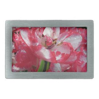 Primer de tulipanes rayados con las gotitas en hebilla cinturón rectangular