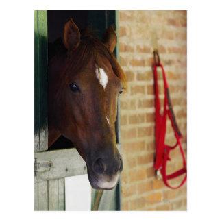 Primer de un caballo 3 tarjeta postal