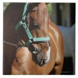 Primer de un caballo 4 azulejo cuadrado grande