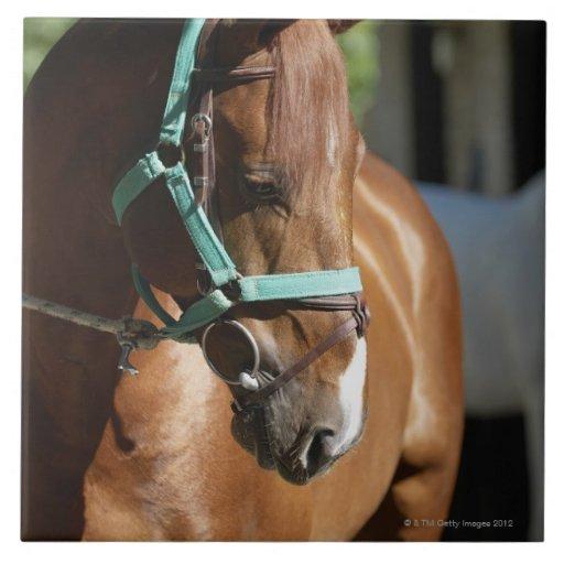 Primer de un caballo 4 tejas  cerámicas